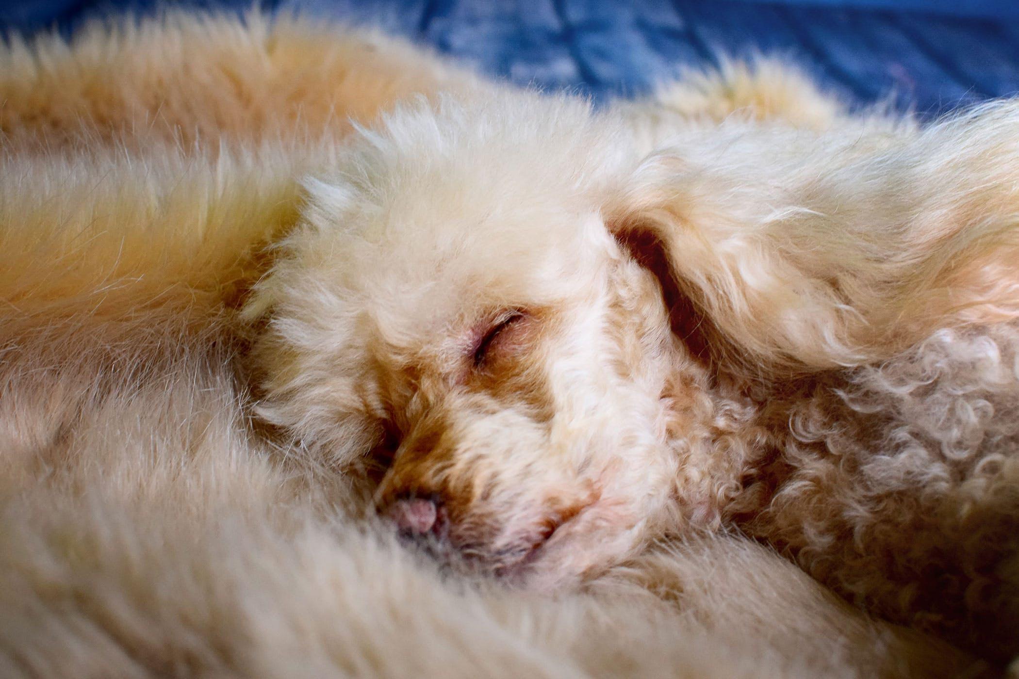 dog fatty tumor treatment