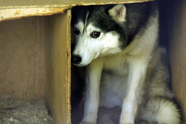 Fear Aggression in Dogs - Symptoms, Causes, Diagnosis, Treatment, Recovery, Management, Cost