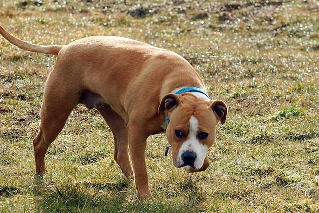 Fear of People in Dogs - Symptoms, Causes, Diagnosis, Treatment, Recovery, Management, Cost