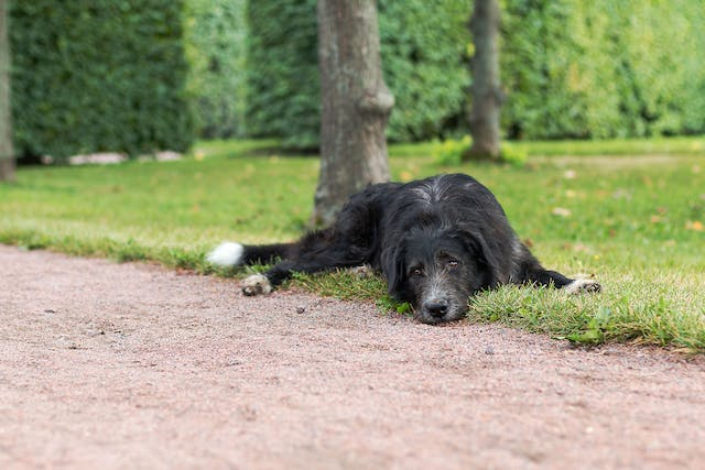 Flea and Tick Dips and Shampoos Poisoning in Dogs - Symptoms, Causes, Diagnosis, Treatment, Recovery, Management, Cost