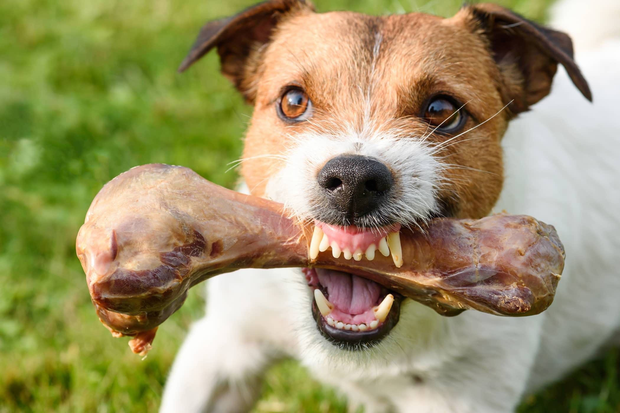 Dealing With Food Aggression In Dogs