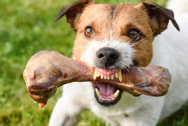Food Aggression in Dogs - Symptoms, Causes, Diagnosis, Treatment, Recovery, Management, Cost