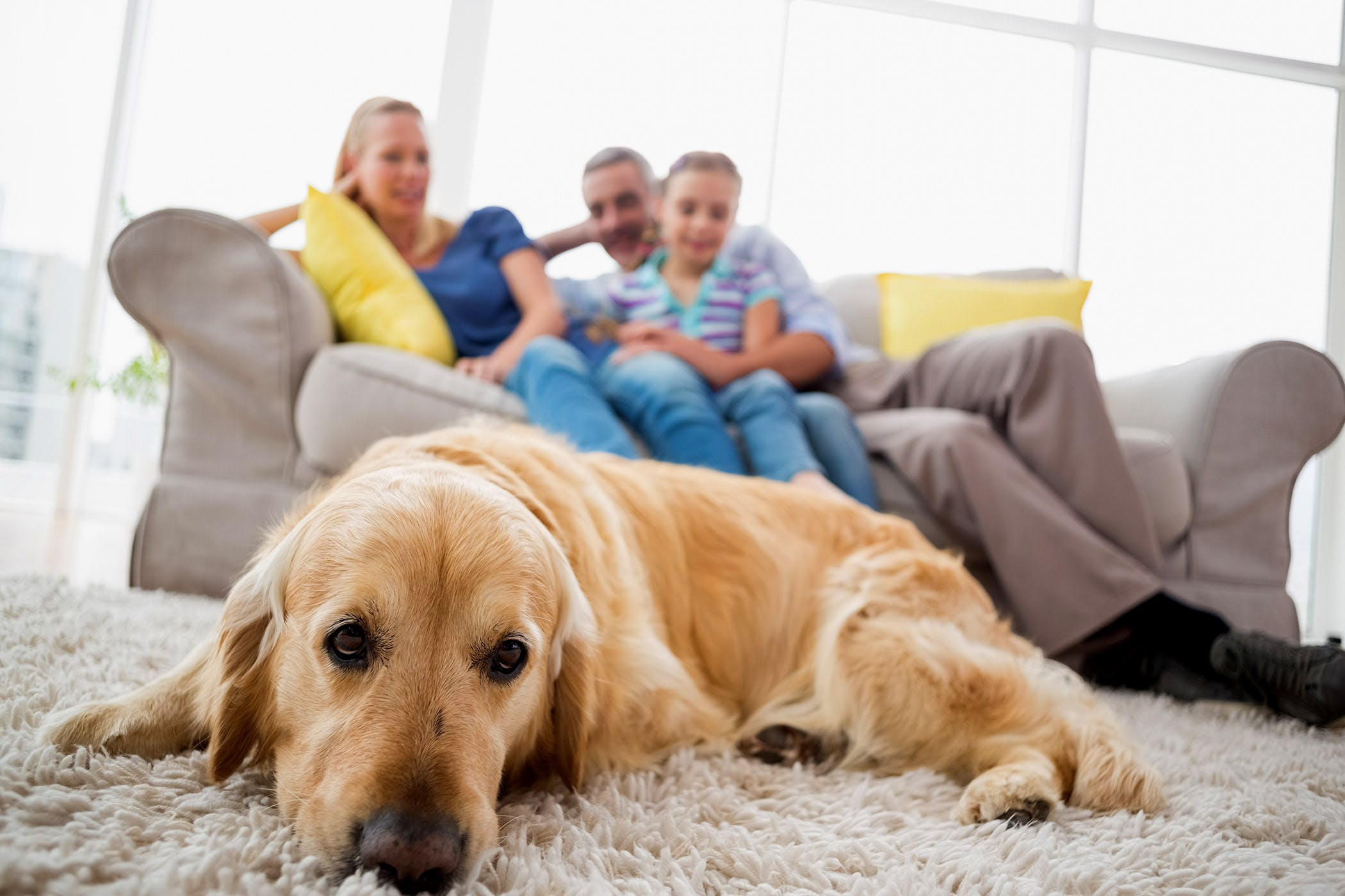 Gas in Dogs - Symptoms, Causes, Diagnosis, Treatment, Recovery