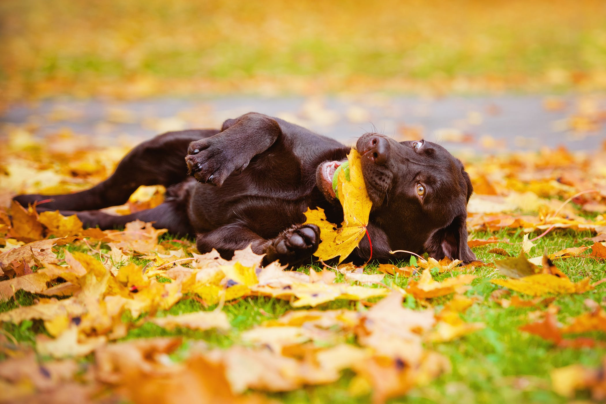 Gastric Lavage in Dogs