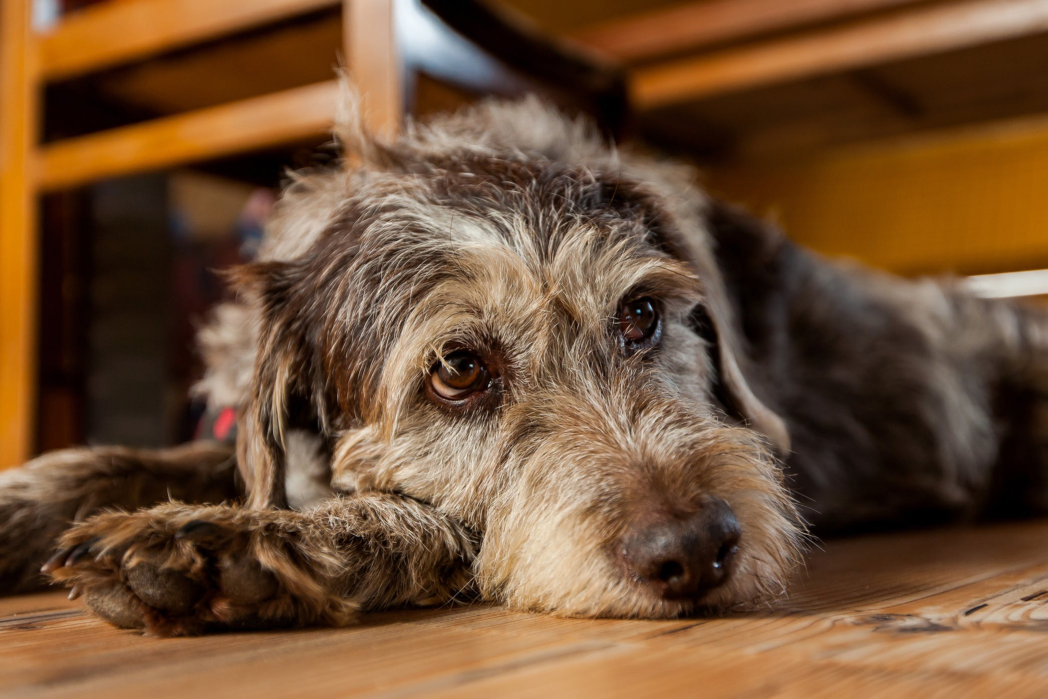 gastrointestinal neoplasia in dogs