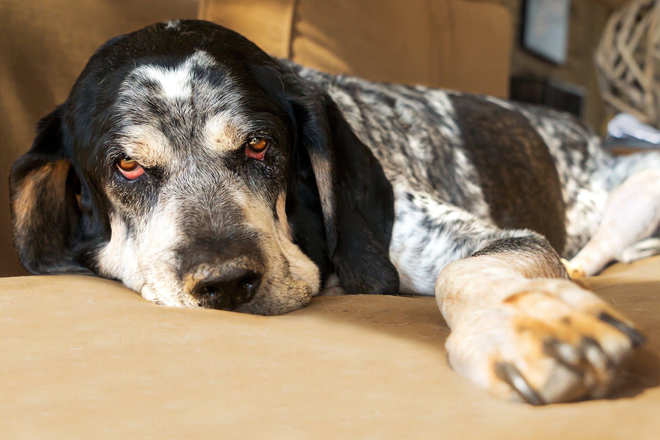 Gastrostomy in Dogs