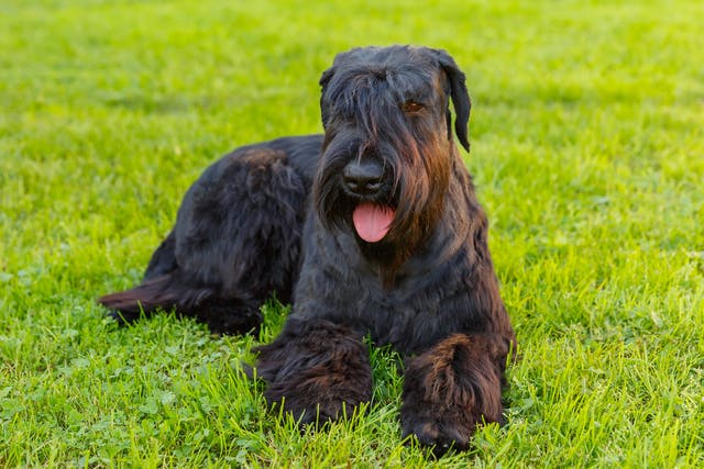 Glanders (Farcy) in Dogs - Symptoms, Causes, Diagnosis, Treatment, Recovery, Management, Cost