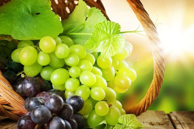 Grapes Poisoning in Dogs - Symptoms, Causes, Diagnosis, Treatment, Recovery, Management, Cost