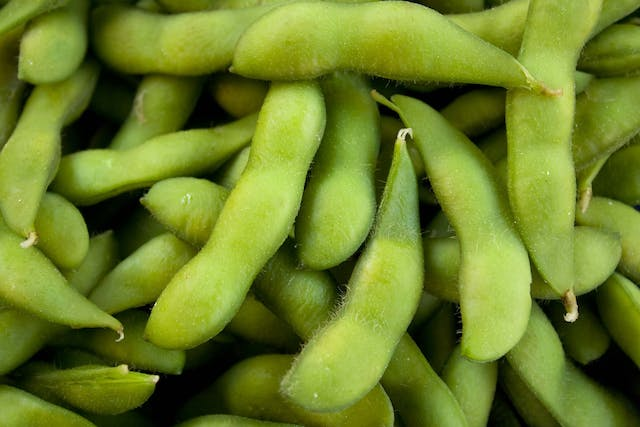 Green Bean Allergies in Dogs - Symptoms, Causes, Diagnosis, Treatment, Recovery, Management, Cost