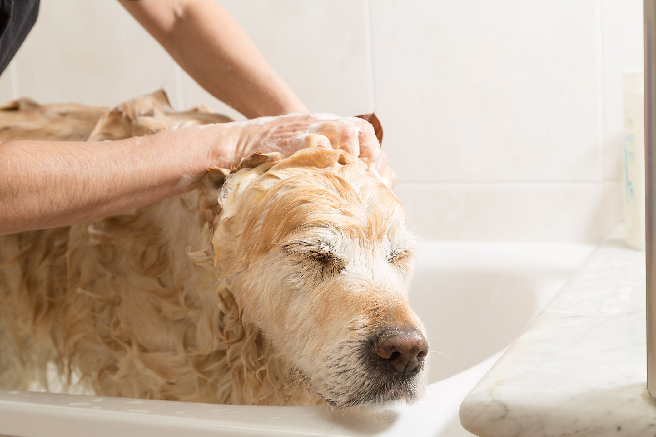 Hair Follicle Tumors In Dogs