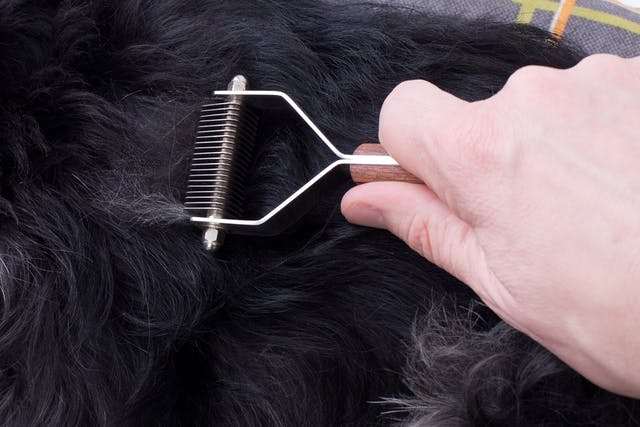 Hair Loss Related to Genetic Factors in Dogs - Symptoms, Causes, Diagnosis, Treatment, Recovery, Management, Cost