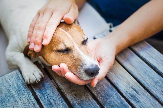 Heart Medicine Poisoning in Dogs - Symptoms, Causes, Diagnosis, Treatment, Recovery, Management, Cost