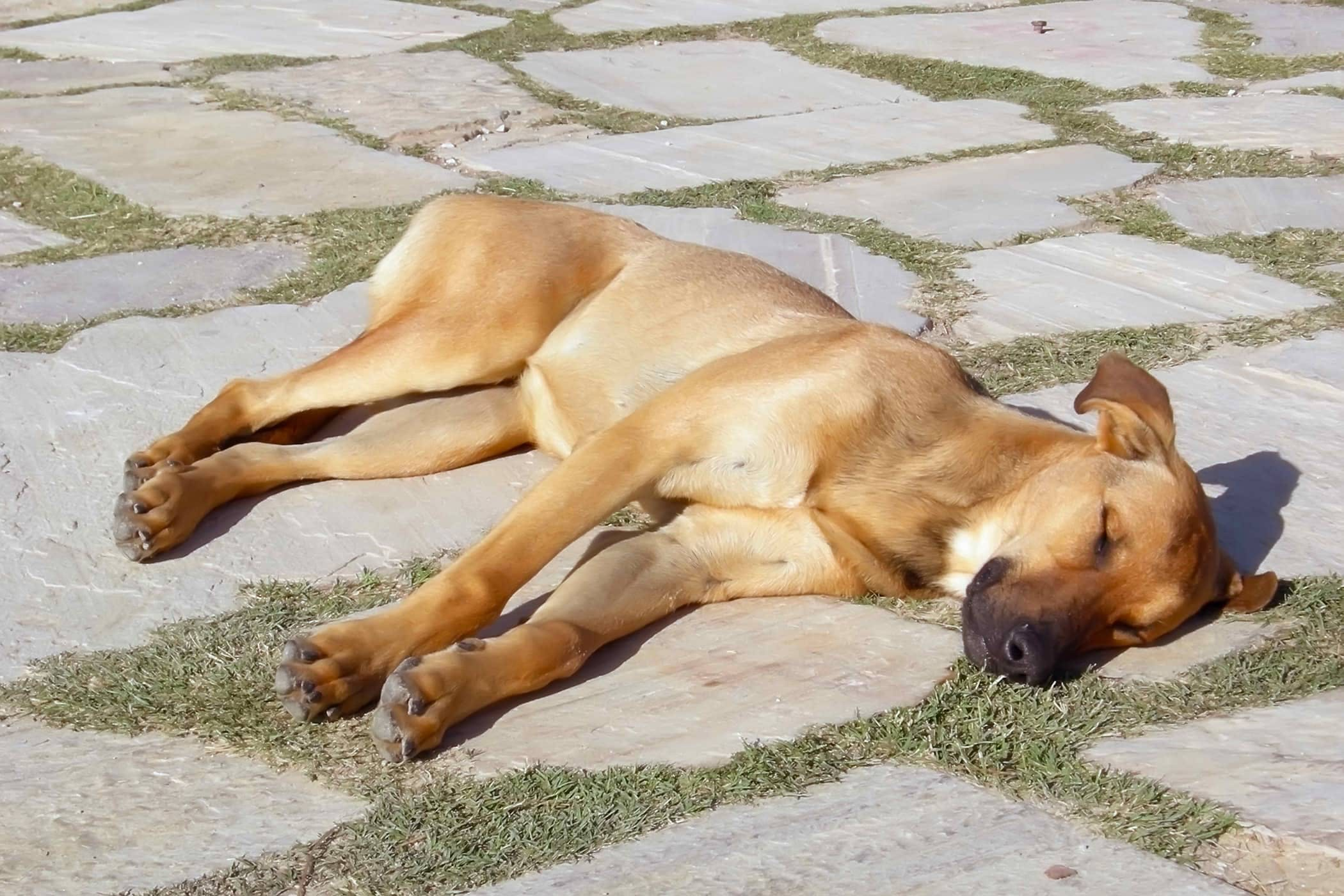 how to help a dog recover from heat stroke