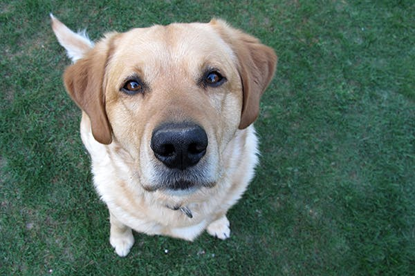Surprising Hemolytic Anemia In Dogs Symptoms Causes Diagnosis Uwap Interior Chair Design Uwaporg