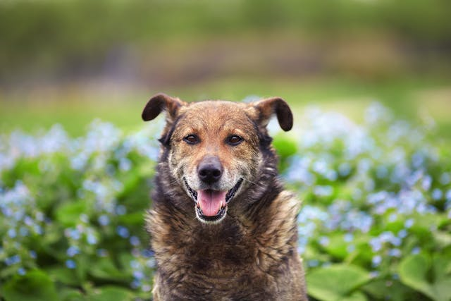 Hemorrhagic Gastroenteritis in Dogs - Symptoms, Causes, Diagnosis, Treatment, Recovery, Management, Cost