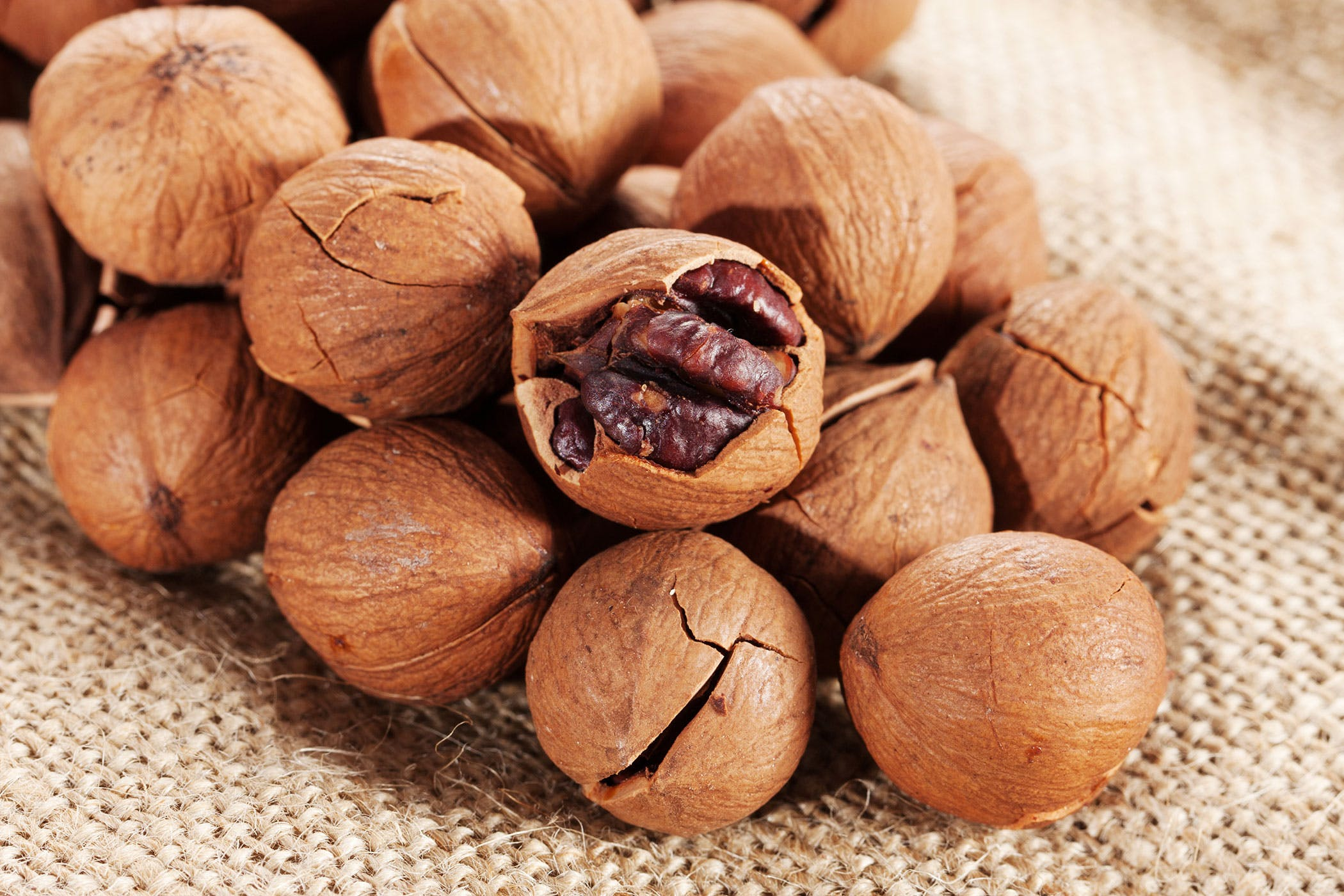 Hickory Nut Poisoning in Dogs
