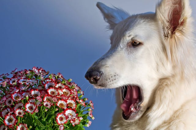 Holistic Allergy Treatment in Dogs - Conditions Treated, Procedure, Efficacy, Recovery, Cost, Considerations, Prevention