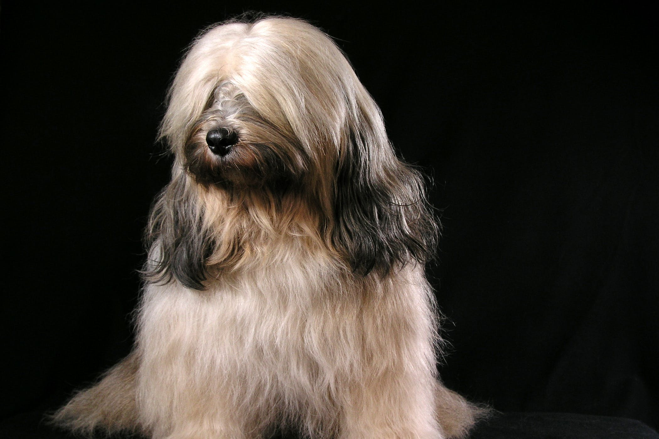 Horner's Syndrome in Dogs - Symptoms, Causes, Diagnosis