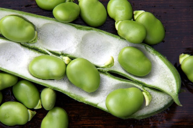 Horse Beans Poisoning in Dogs - Symptoms, Causes, Diagnosis, Treatment, Recovery, Management, Cost