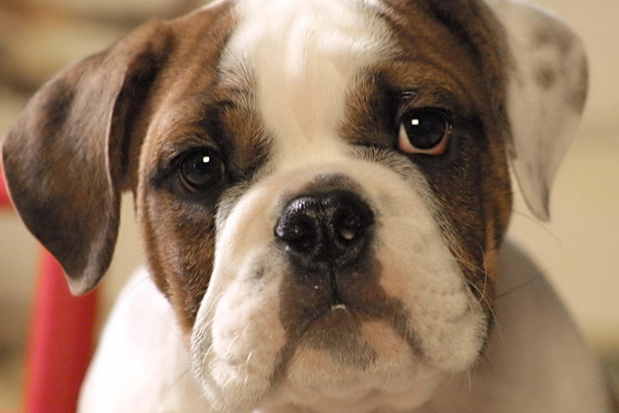 Human Dander Allergies In Dogs