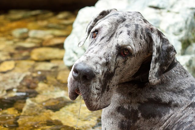 Hypersialism in Dogs - Symptoms, Causes, Diagnosis, Treatment, Recovery, Management, Cost