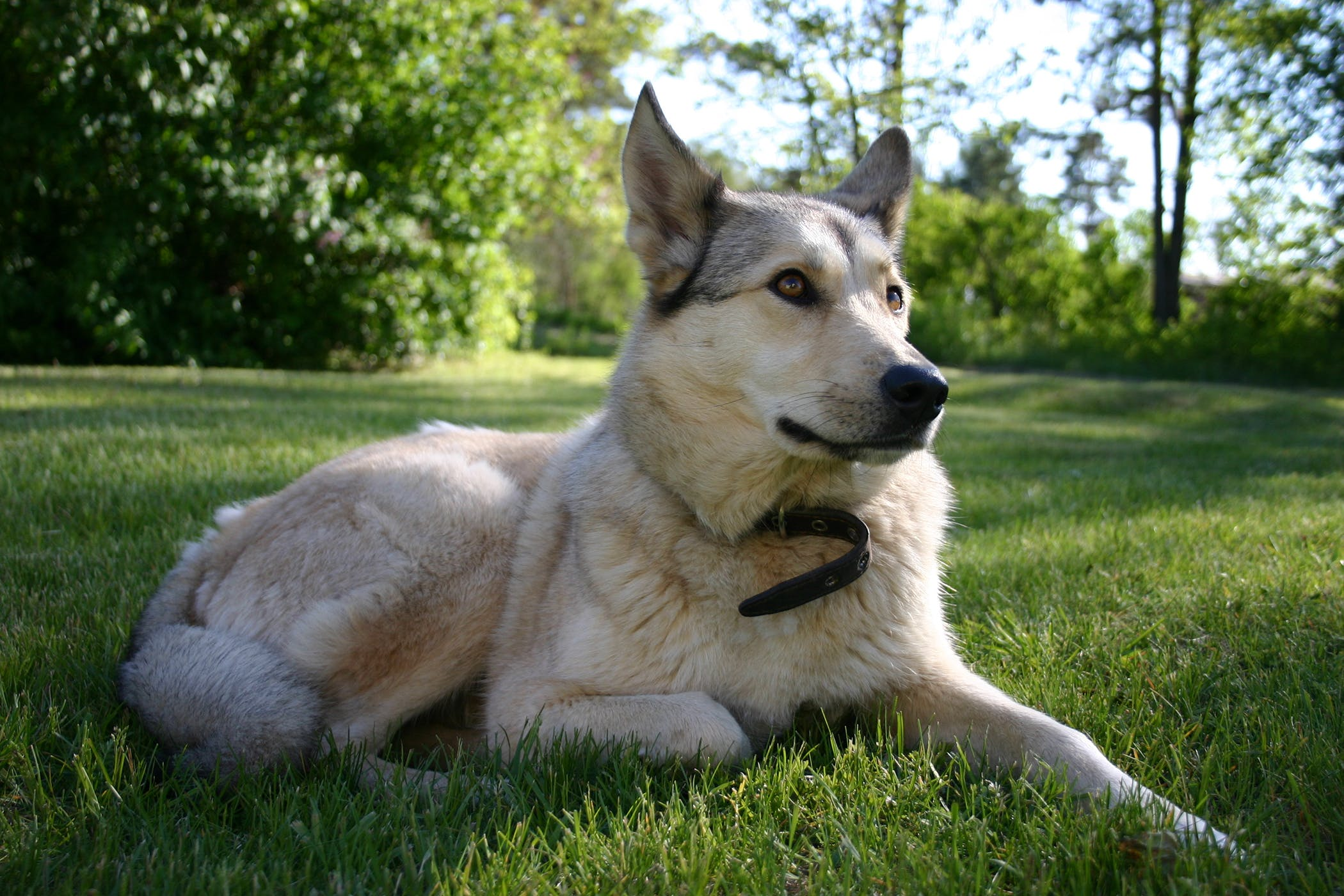 Hyphema in Dogs - Symptoms, Causes, Diagnosis, Treatment, Recovery