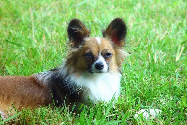 Imidacloprid Toxicity in Dogs - Symptoms, Causes, Diagnosis, Treatment, Recovery, Management, Cost