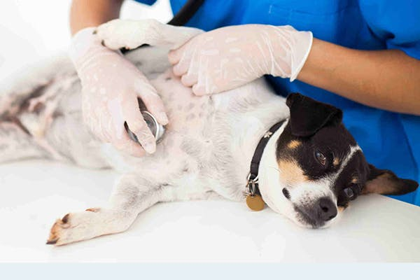 immune system tumors in dogs