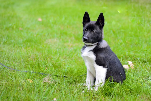 Increased Urination and Thirst in Dogs - Symptoms, Causes, Diagnosis, Treatment, Recovery, Management, Cost