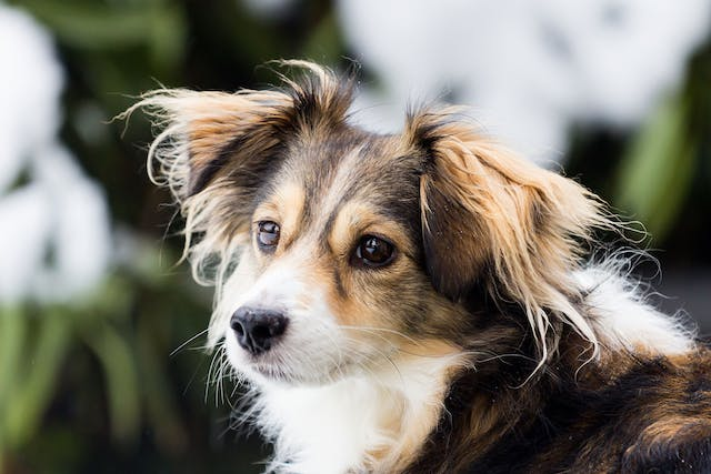Infertility (Female) in Dogs - Symptoms, Causes, Diagnosis, Treatment, Recovery, Management, Cost