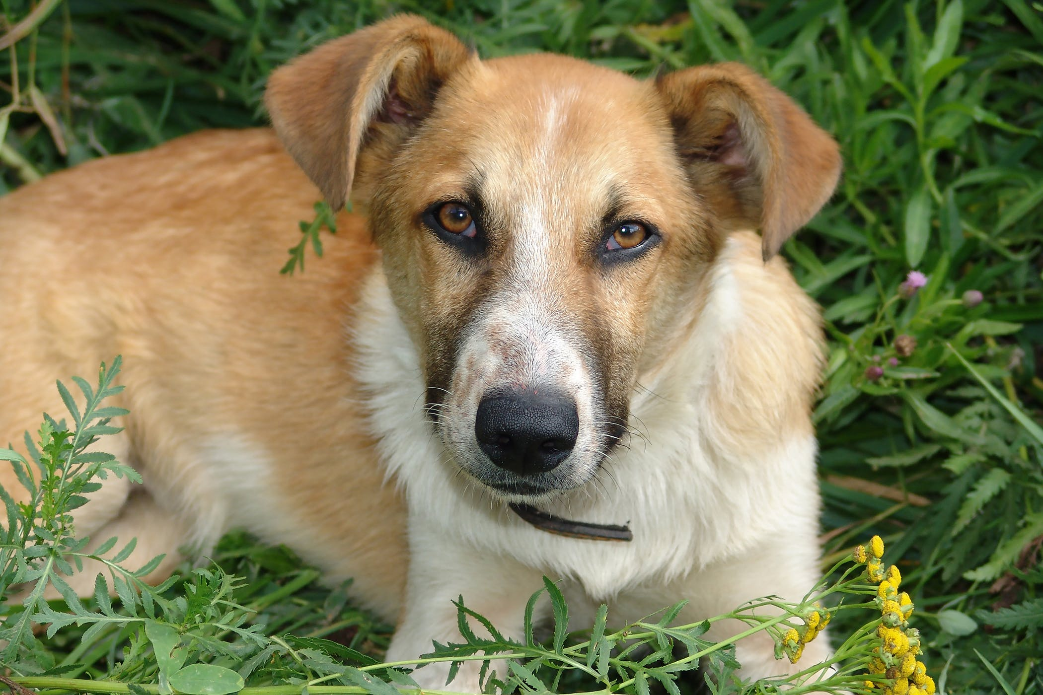 Inflammation of the Mouth in Dogs - Symptoms, Causes, Diagnosis