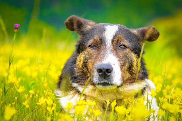 Injections Of Growth Hormone in Dogs - Conditions Treated, Procedure, Efficacy, Recovery, Cost, Considerations, Prevention