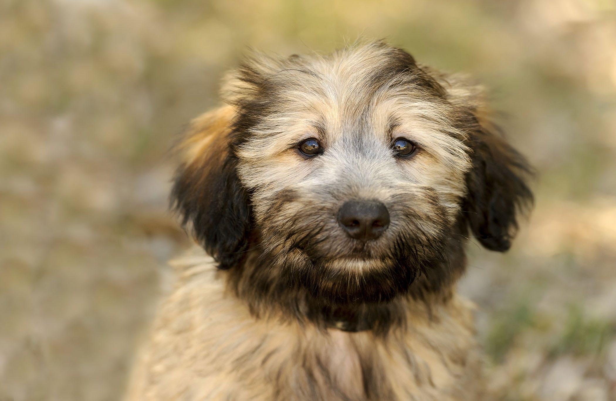 Intestinal Virus (Reovirus) in Dogs