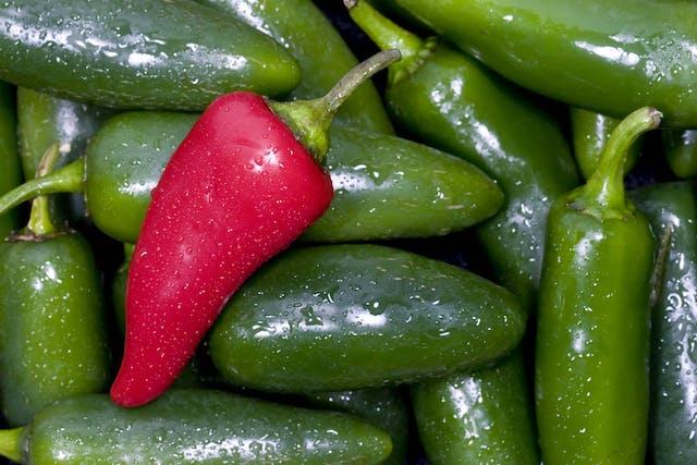 Jalapeno Allergies in Dogs - Symptoms, Causes, Diagnosis, Treatment, Recovery, Management, Cost