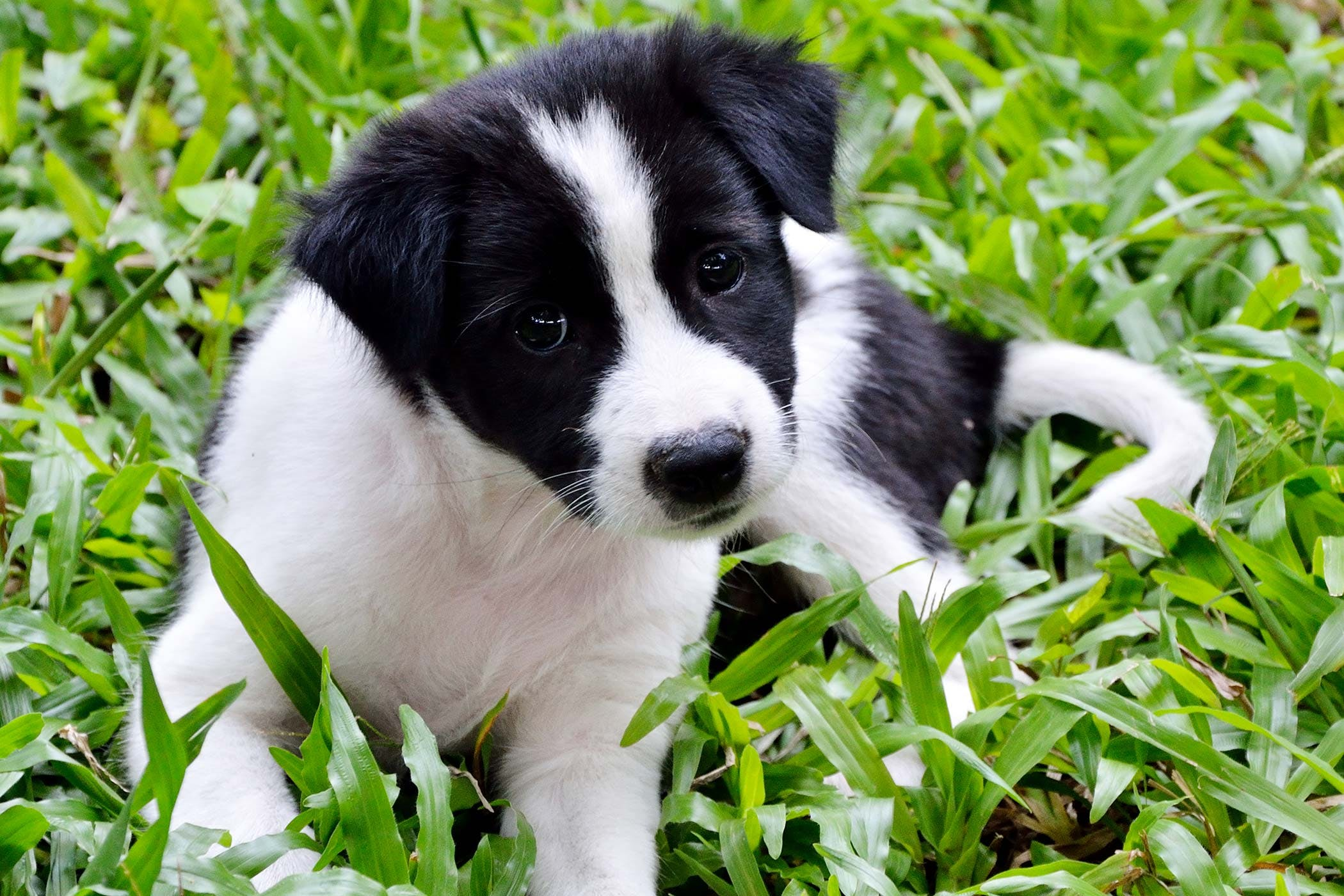 Kibbles and Bits Allergies in Dogs