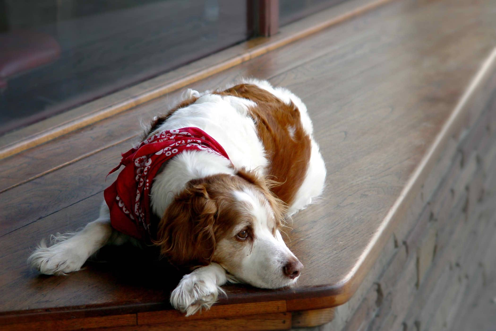 Kidney Dysfunction In Dogs Symptoms Causes Diagnosis Treatment