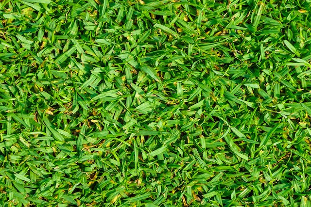 Kikuyu Grass Allergies in Dogs - Symptoms, Causes, Diagnosis, Treatment, Recovery, Management, Cost