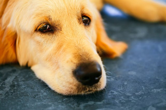 Lack of Bowel Control in Dogs - Symptoms, Causes, Diagnosis, Treatment, Recovery, Management, Cost