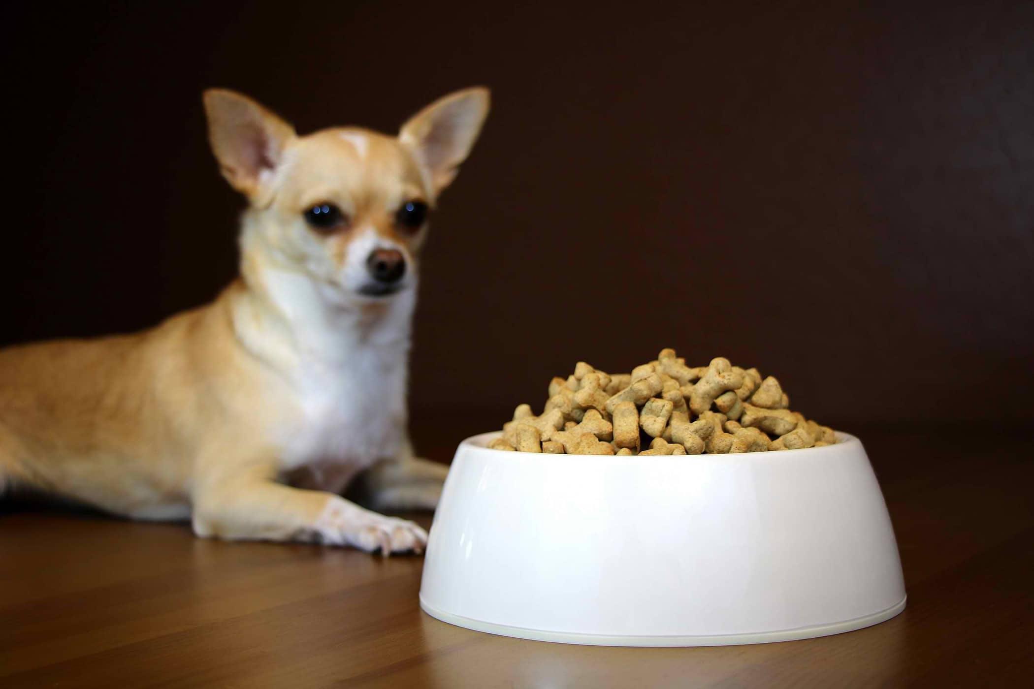 Dog Bilious Natural Treatment
