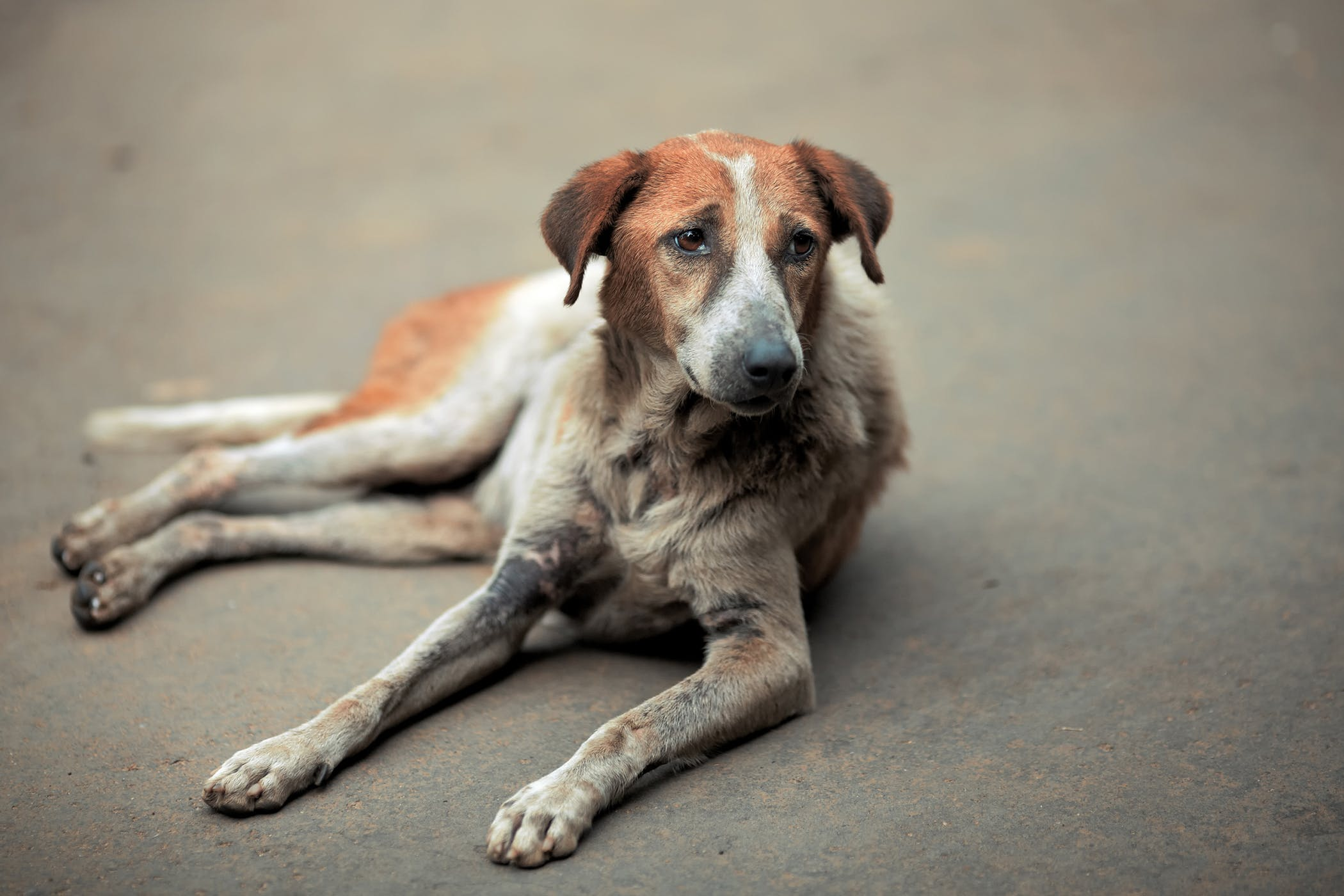 Cost Of Leukeran For Dogs