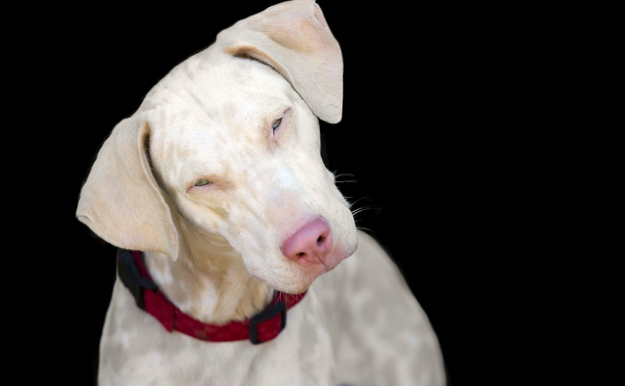 Lysosomal Storage Diseases In Dogs