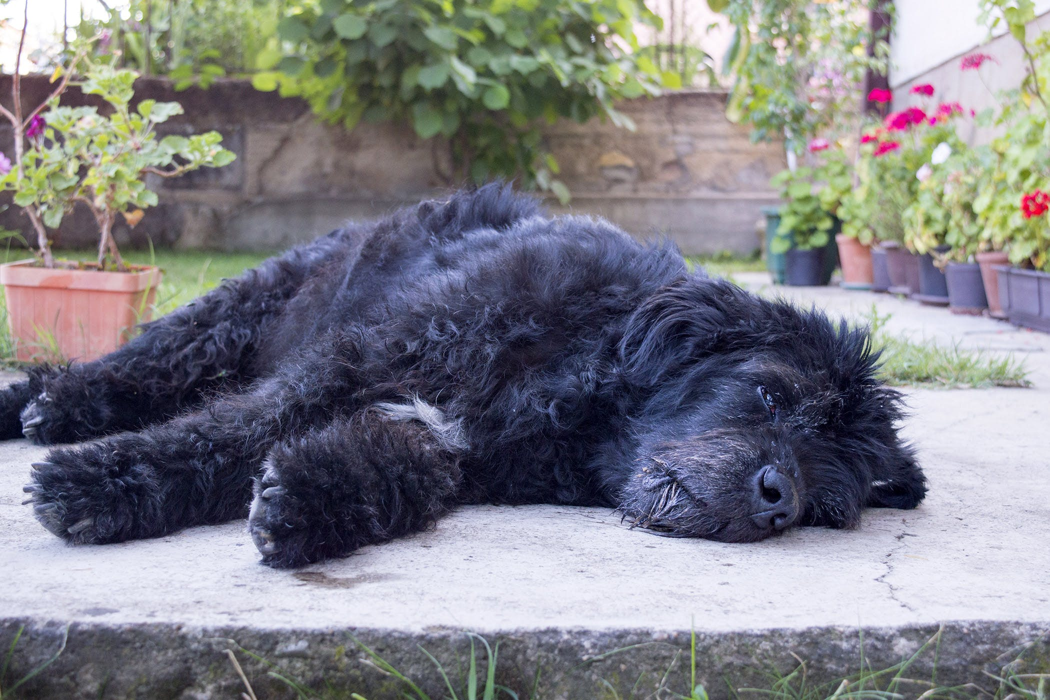 Magnesium Deficiency in Dogs