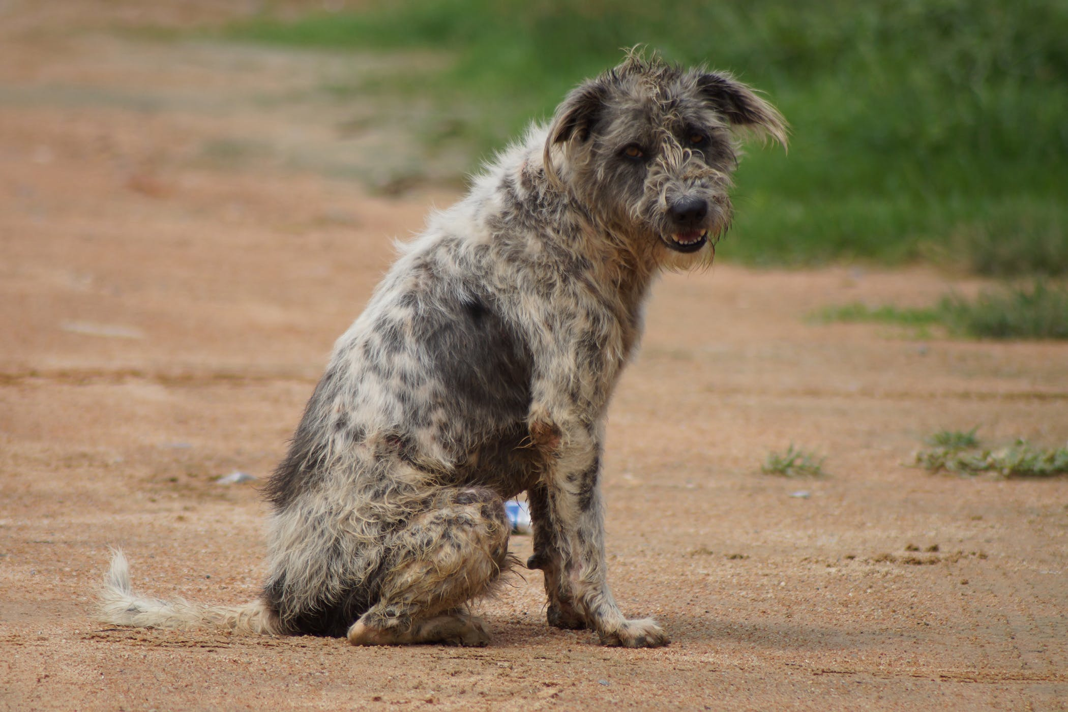 Home Treatment For Malassezia In Dogs