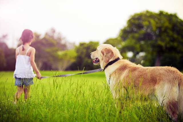 Meningomyelitis in Dogs - Symptoms, Causes, Diagnosis, Treatment, Recovery, Management, Cost