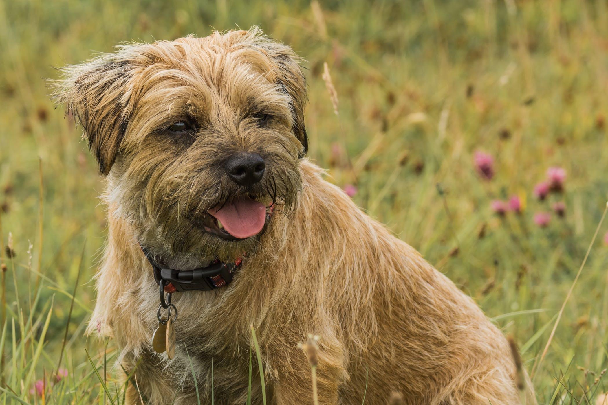 Methicillin-Resistant Staphylococcus Aureus in Dogs - Symptoms