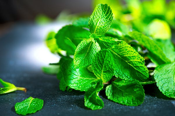 Mint Poisoning in Dogs - Symptoms, Causes, Diagnosis, Treatment, Recovery, Management, Cost