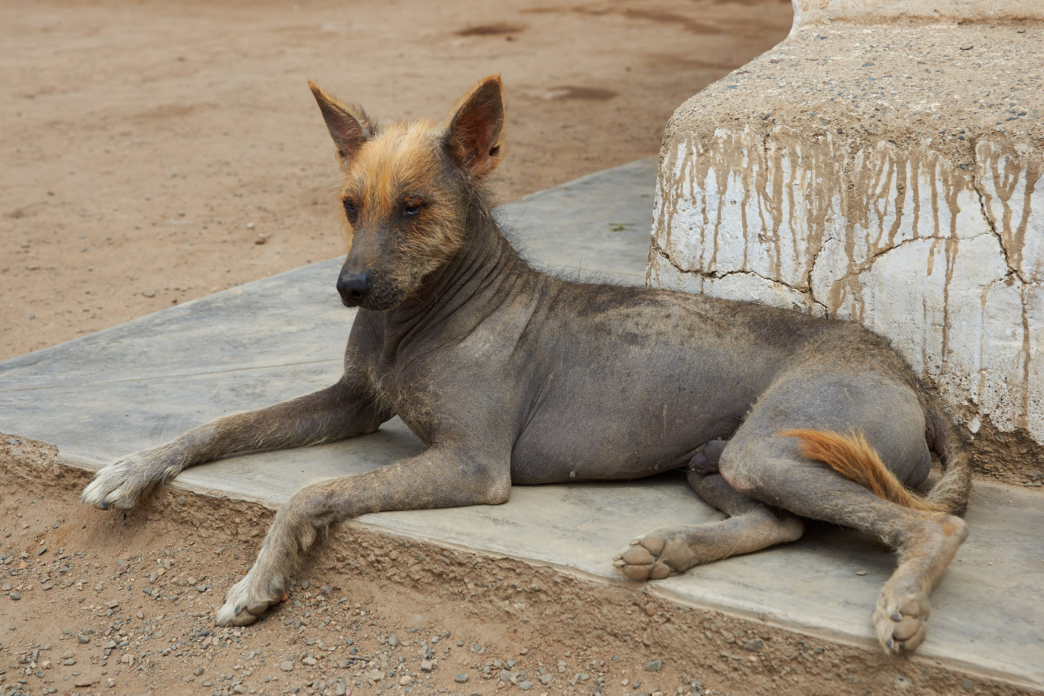 How To Heal Skin Dermatitis In Dogs | Natural Dog Company