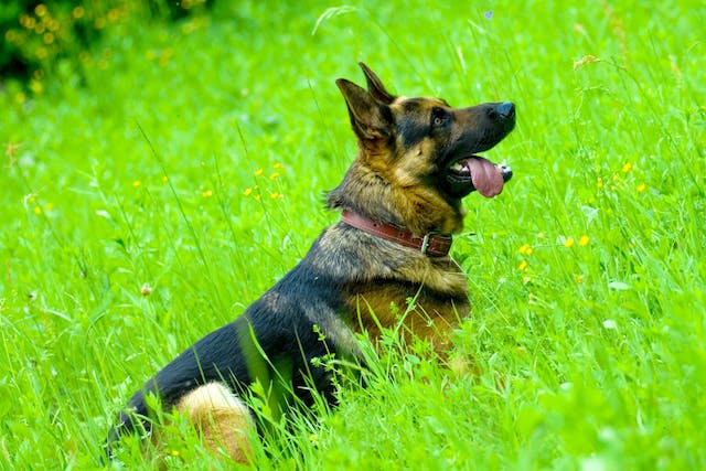 Nasal Discharge in Dogs - Symptoms, Causes, Diagnosis, Treatment, Recovery, Management, Cost