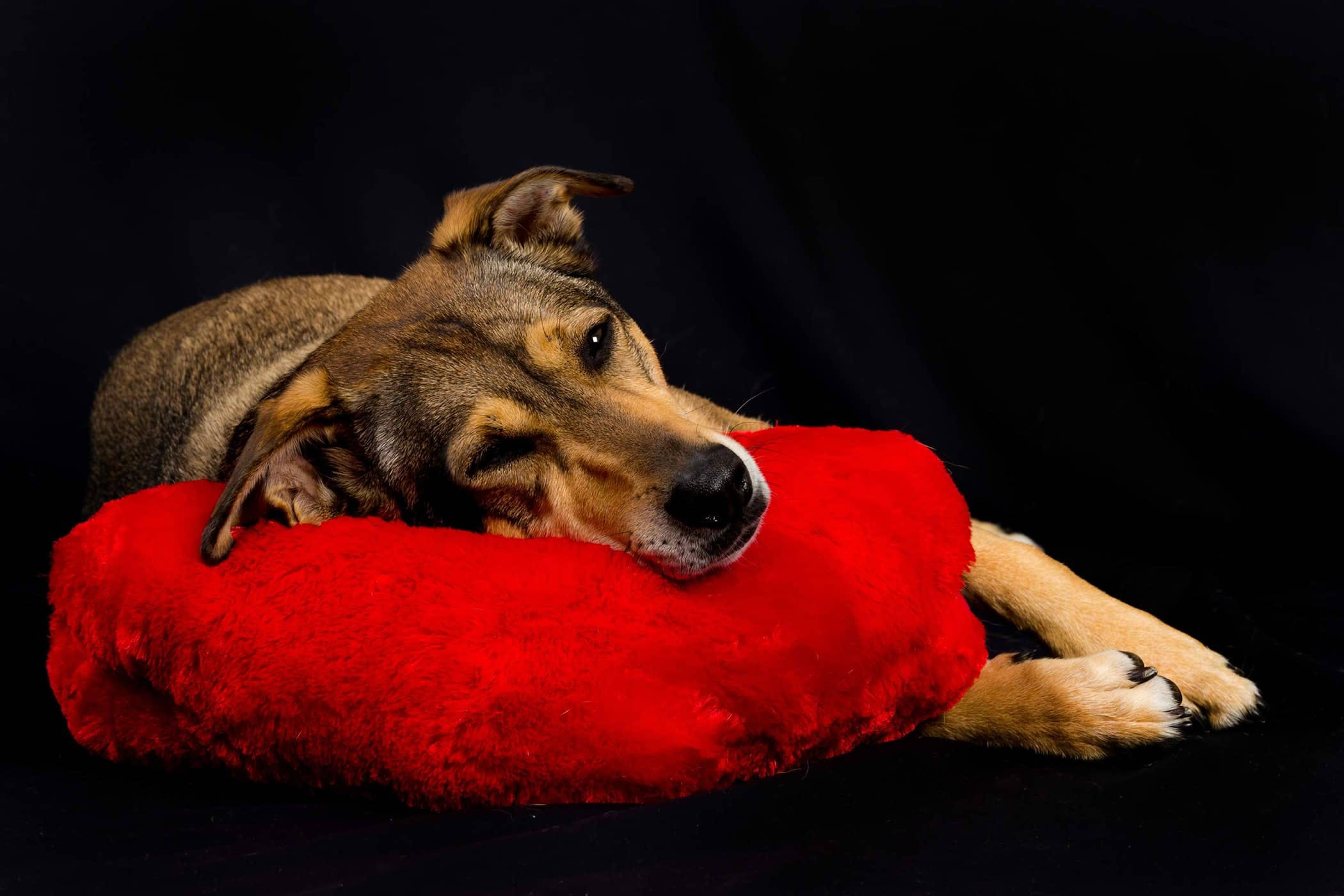 Natural Kennel Cough Treatments In Dogs