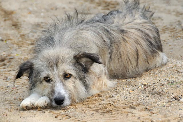 Natural Remedies for Kidney Failure  in Dogs - Conditions Treated, Procedure, Efficacy, Recovery, Cost, Considerations, Prevention